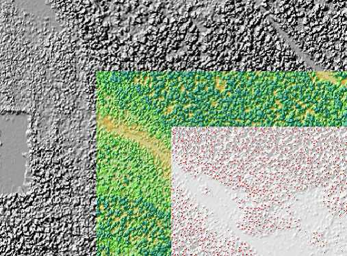 LIDAR Tree Crown Mapping